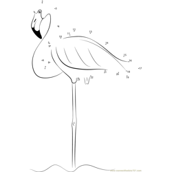 Flamingos Stand on One Leg in Water