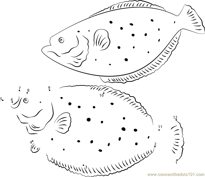 Winter flounder dot to dot printable worksheet connect the dots