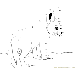 Cute Baby Fox Dot to Dot Worksheet