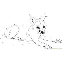Fox Relaxing Dot to Dot Worksheet