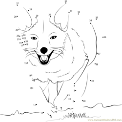 Fox Running Dot to Dot Worksheet