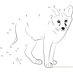 Young Fox Dot to Dot Worksheet