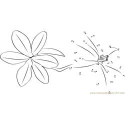 Freesia Dot to Dot Worksheet