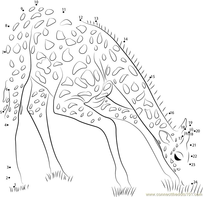 Giraffe Eating Grass Dot To Dot Printable Worksheet Connect The Dots