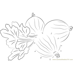 Gooseberry with Leaves Dot to Dot Worksheet