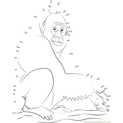 Setting Western Lowland Gorilla Dot to Dot Worksheet