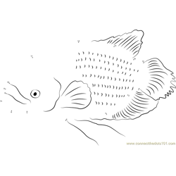 Giant Gourami Swims Dot to Dot Worksheet