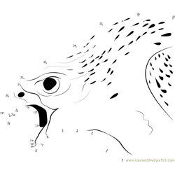 White Gyrfalcon Angry
