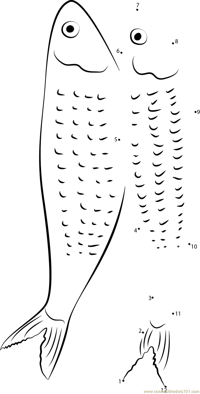 herring coloring pages - photo#32