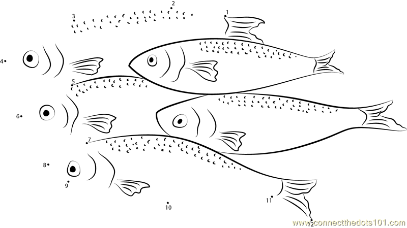 herring coloring pages - photo#12
