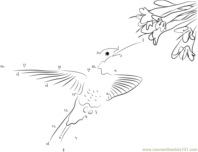 Hummingbird With Flowers Dot To Dot Printable Worksheet