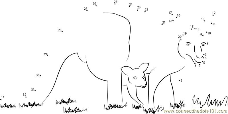 Kangaroo Labelling | Animal unit | Pinterest | Kangaroos ...