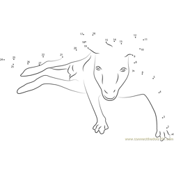Kangaroo Face Dot to Dot Worksheet