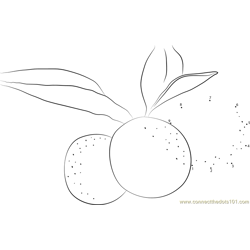 Kumquats Plants Dot to Dot Worksheet