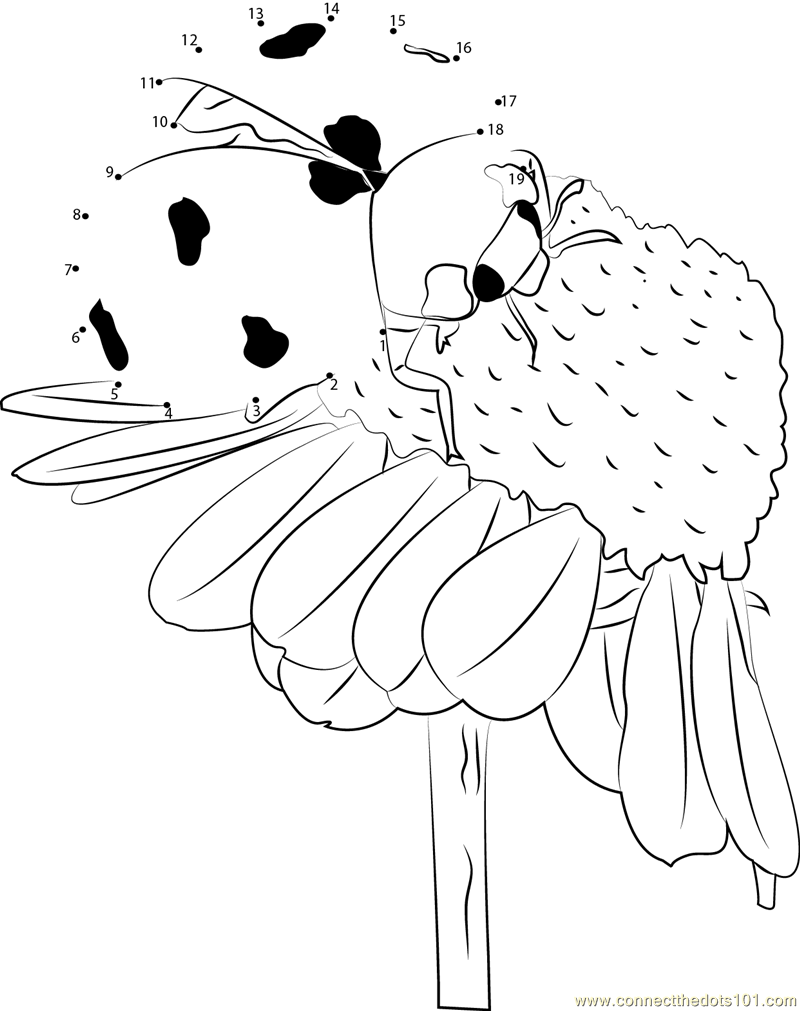 Ladybug Pollinate Flowers dot to