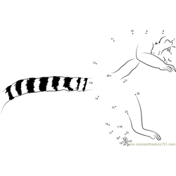 Ring Tail Lemur Leaping