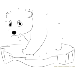 Little Polar Bear on Ice Surface