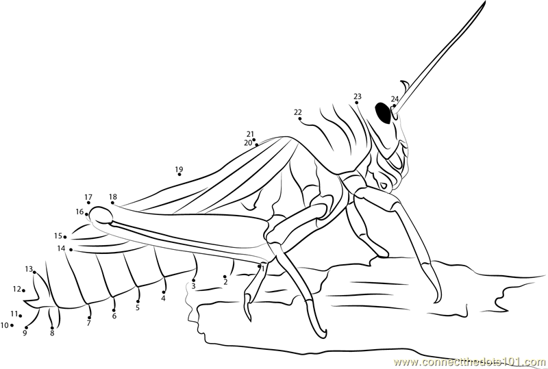 Locust dot to dot printable worksheet connect the dots for Locust coloring page