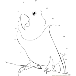 Little Love Bird