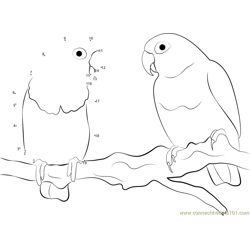 Very Cute Love Bird