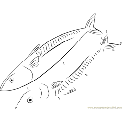 Japanese Spanish Mackerel Dot to Dot Worksheet
