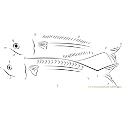 Kembong Fish Dot to Dot Worksheet