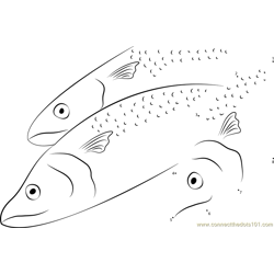 Papuan Spanish Mackerel Dot to Dot Worksheet
