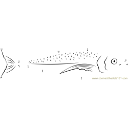 Spanish Mackerel Dot to Dot Worksheet