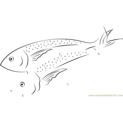 Wahoo Mackerel Dot to Dot Worksheet