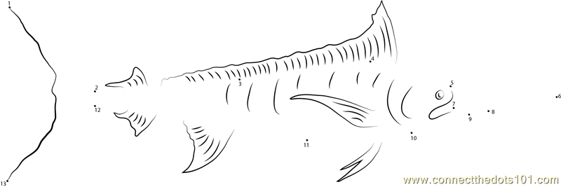 Marlin Fish Dot To Dot Printable Worksheet