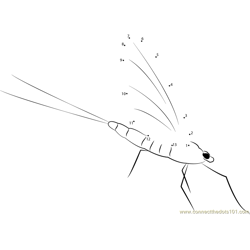 Aquatic Mayfly