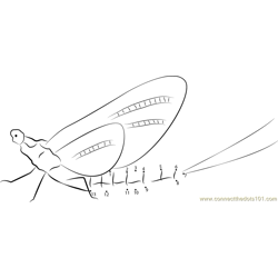 Shadflies Dot to Dot Worksheet