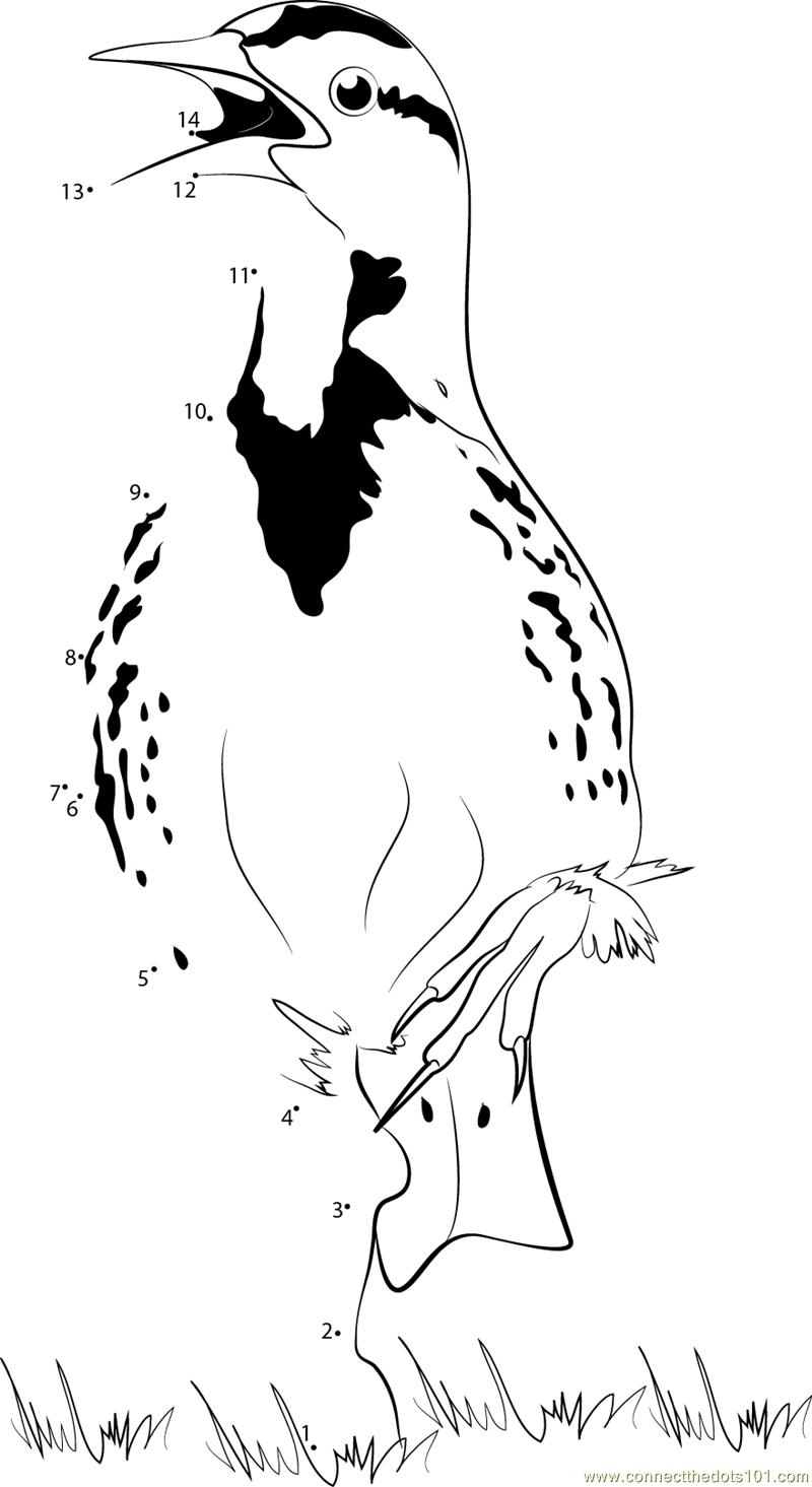 Calling eastern meadowlark dot to dot printable worksheet for Meadowlark coloring page