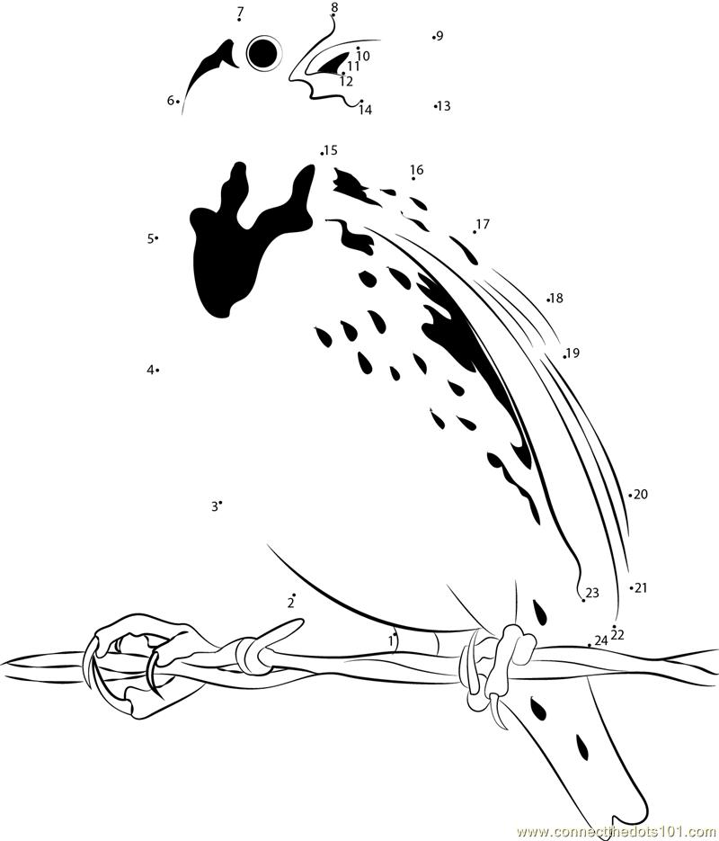Cool Meadowlark Bird dot to dot printable worksheet ...