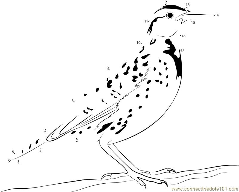 Standing On Tree Meadowlark Bird Dot To Dot Printable