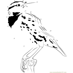 Eastern Meadowlark Songs and Calls