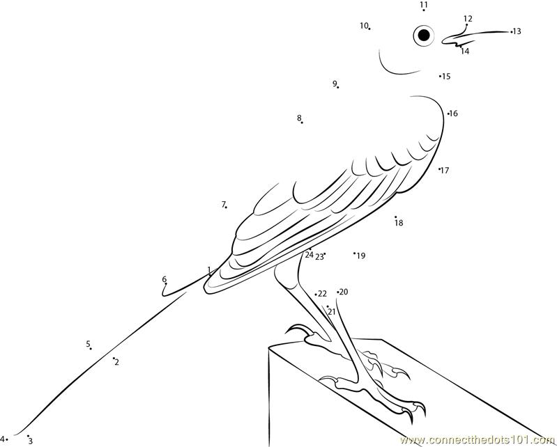 Mockingbird With Long Tail Dot To Dot Printable Worksheet