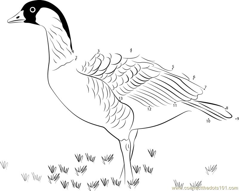 hawaiian goose coloring pages - photo#10