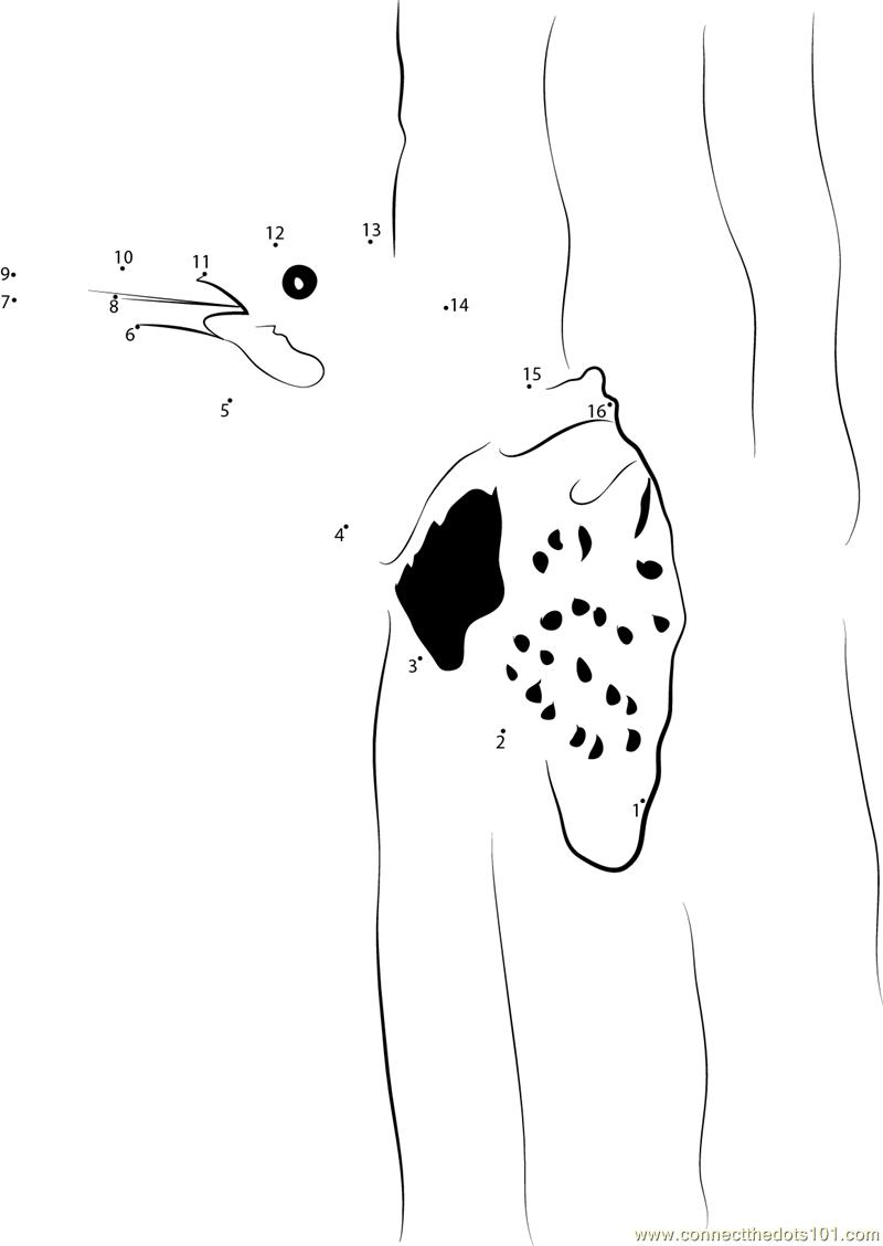 Adult Female Leaving Nest dot to dot printable worksheet
