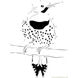 I Love These Northern Flickers