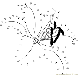 Oriental Lily Dot to Dot Worksheet