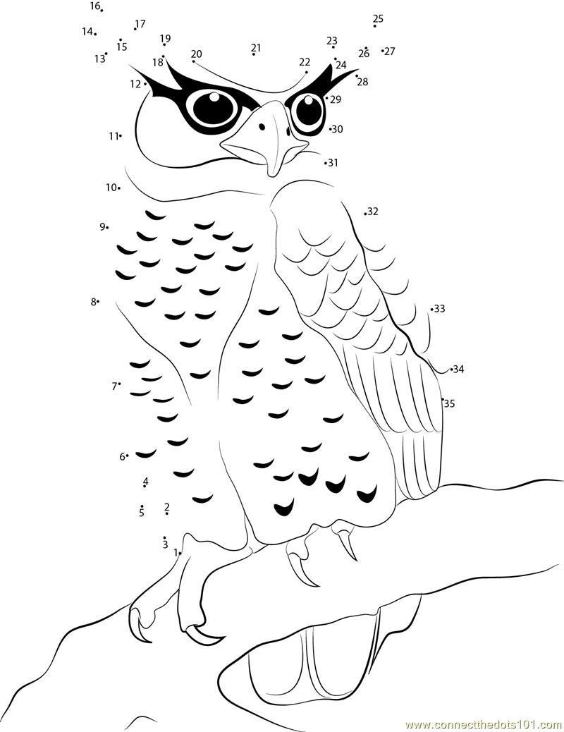 worksheet Owl Worksheets owl connect the dots worksheets printable for kids spot bellied eagle owl