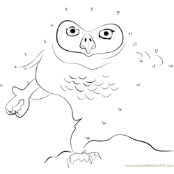 Owl Dance Dot to Dot Worksheet