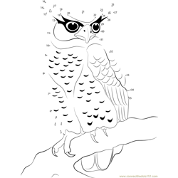 Spot Bellied Eagle Owl Dot to Dot Worksheet