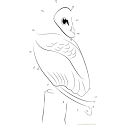 Tyto alba Dot to Dot Worksheet