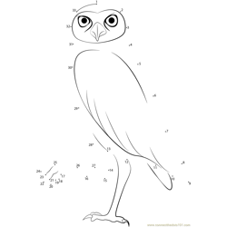 Walking Owl Dot to Dot Worksheet