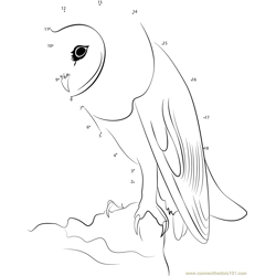 White Faced Owl Dot to Dot Worksheet