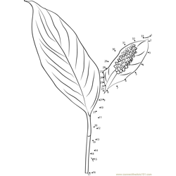 Peace Lily Flower Dot to Dot Worksheet