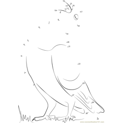 Pigeon Standing on Grass