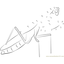 Garden Insect Mantis Dot to Dot Worksheet